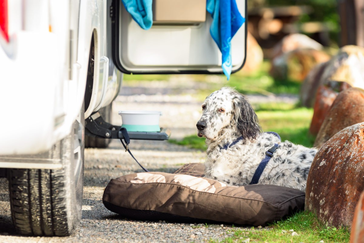 rvs and pets, RVs and Pets 101: Keeping Your Pup Safe When You're Away