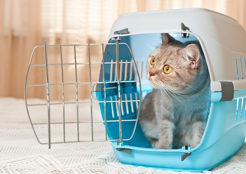 rvs and pets, RVs and Pets: Introducing Your Cat to Your Motorhome