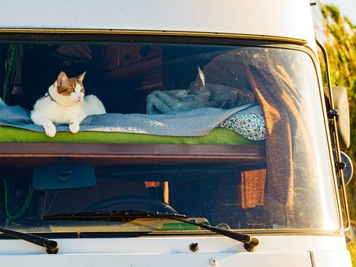 rvs and pets, RVs and Pets: Is It Okay to Leave My Pet Inside My RV?