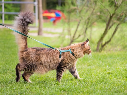 rvs and pets, RVs and Pets: Adventure Tips for Traveling With Your Cats
