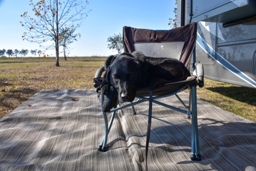 rvs and pets, 3 Must-Haves for Full-Timing RVs and Pets (Especially Dogs)